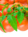 Composition of tomato with copyspace Stock Photo