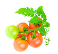Composition of tomato isolated Royalty Free Stock Photos