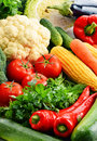 Composition with variety of fresh raw organic vegetables Royalty Free Stock Images