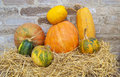 Composition from various pumpkins and straw Royalty Free Stock Photos