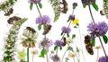 Composizione femminile negli api di operaio Immagine Stock Libera da Diritti