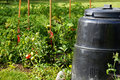 Compost bin and vegetable garden Stock Photos