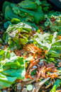 Composting the kitchen waste in a container Stock Photos