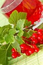 Compote of red currants Stock Photography