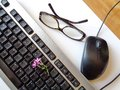 Computer keyboard with pink spring flower, mouse Royalty Free Stock Photo