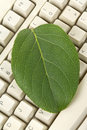 Computer Keyboard and leaf Royalty Free Stock Images
