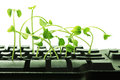 Computer keyboard with snow pea sprouts close up of Royalty Free Stock Image