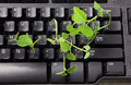 Computer Keyboard with Sprouts Royalty Free Stock Photo