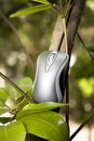 Computer mouse in a tree Royalty Free Stock Photography
