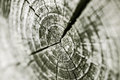 Concentric rings of a trunk macro small Stock Images