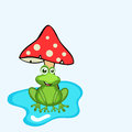 Concept of frog under mushroom funny cute creative sitting Stock Photo
