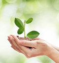 Concept about growing a tree - love nature - save the world. Royalty Free Stock Photo
