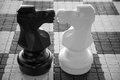 Concept love two chess knights kiss Royalty Free Stock Photo