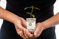 Concept of presenting plant growing from usd currency symbolizi symbolizing financial wealth Stock Photography