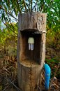 Energy saving bulbs are in the tree. Royalty Free Stock Photo