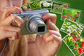 Concept of taking nature photos by digital camera closeup on hands young girl as photography Stock Images