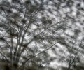 Monotone uniformly distributed fuzzy spots and bare clear trees Royalty Free Stock Photo
