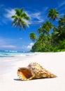 Concetto di shell tropical beach nature sea Fotografie Stock Libere da Diritti