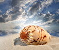 Conch shell on beach Royalty Free Stock Photography