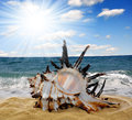Conch shell on beach in the background sea and sunny sky Stock Images