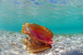 Conch shell in ocean Royalty Free Stock Photos