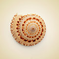 Conch shell picture of a on a beige background with a retro effect Stock Photo