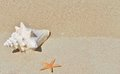 Conch shell on sand beach with sea Royalty Free Stock Photo