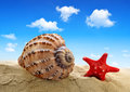 Conch shell with starfish on beach Royalty Free Stock Images