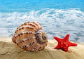 Conch shell with starfish on beach Stock Photography