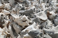 Conch shells pile of on the lac cai beach bonaire dutch caribbean former netherlands antilles Royalty Free Stock Image