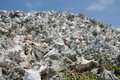 Conch shells pile of on the lac cai beach bonaire dutch caribbean former netherlands antilles Stock Image