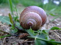 Conch snails in the house on grass Stock Photo