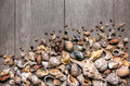 Conches and Shells Royalty Free Stock Photography