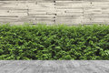 Concrete decking and plant with wall garden decorative Royalty Free Stock Photo