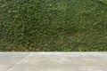 Concrete floor and green leaf ivy plant covered stone fence wall Royalty Free Stock Photo