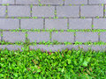 Concrete sidewalk coverage with sprouting green grass. Royalty Free Stock Photo