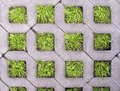 Concrete square cells with living grass Royalty Free Stock Photo