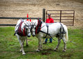 Concurrence de traction de cheval Photos stock