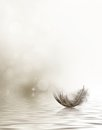 Condolence or sympathy design with feather a drifting on water Royalty Free Stock Photos