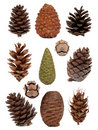 Cones collection Royalty Free Stock Image
