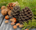 Cones and nuts on a gray background Stock Photography
