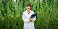 Confident doctor posing in a hemp field Royalty Free Stock Photo