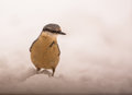 Confused eurasian nuthatch moves deeply snow covered ground food not all used to unfamiliar habitat which far logs trees which s Stock Photography