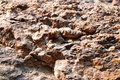 Conglomerate texture of the stone strip surface texture at phataem national park Stock Image