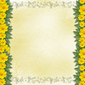Congratulation with frame and yellow flowers Stock Photo
