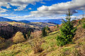Conifer hillside near autumn forest on top of the mountain lands landscape coniferous trees a yellowed Stock Photos