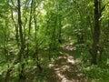 Coniferous ? ревесина украины путя пущи восточной европы Стоковое Изображение RF