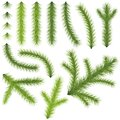 Coniferous Branches Stock Image