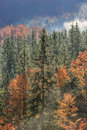 Coniferous and deciduous mountain forest in autumn colors Royalty Free Stock Photo