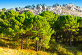 Coniferous forest on the background of mountains in spain Stock Image